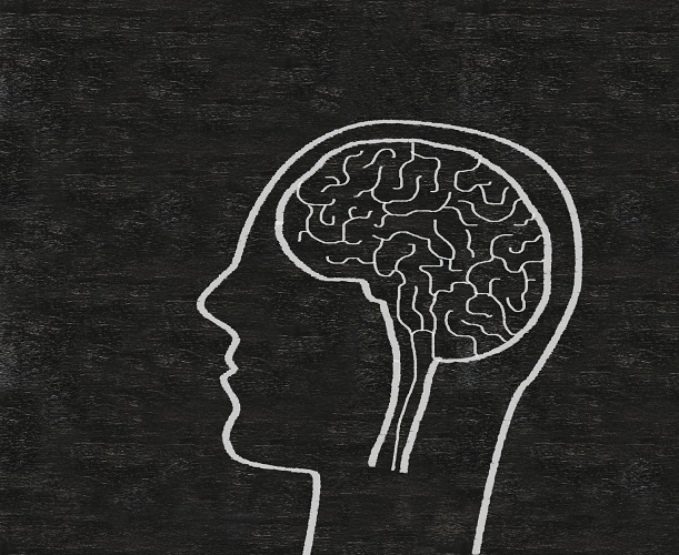 ADHD-Brain